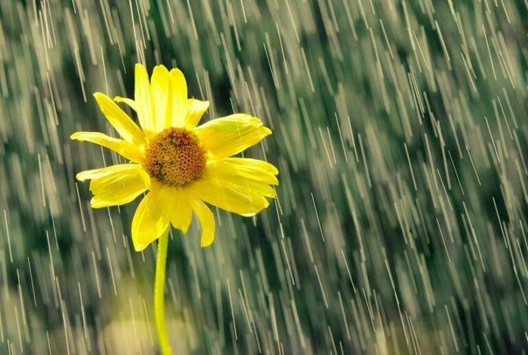 """ဂျပန်လို """"မိုး"""" ကို အမျိုးအစားခွဲထားတာ ၄၀၀ကျော်တောင်ရှိတယ် ! ?"""
