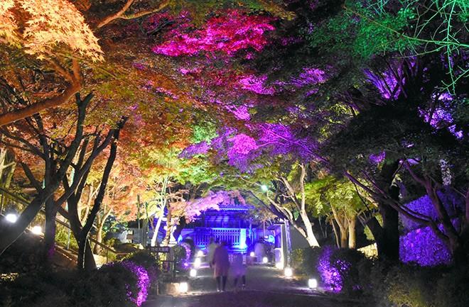 ကျော်ကြားသော Shiga ဘုရားကျောင်းရှိ ညအမှောင်အခါ တောက်ပနေသောမေပယ်ရွက်များ