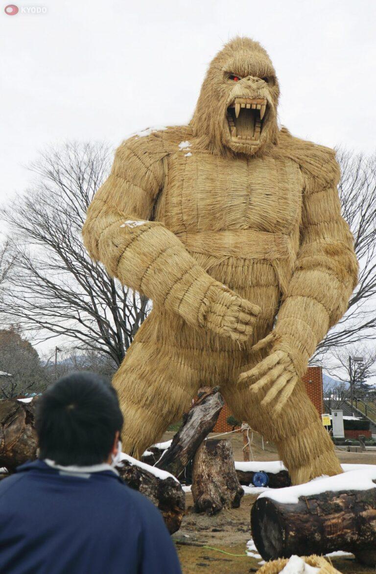 Fukuoka စီရင်စုတွင် ထူးဆန်းစွာဖြင့်ပေါ်လာသော ဧရာမကောက်ရိုးဂေါ်ရီလာ !!!
